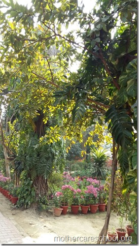 Learning in the lap of Nature. The Gardens at Mothercare School this Winter January 2018 (2)