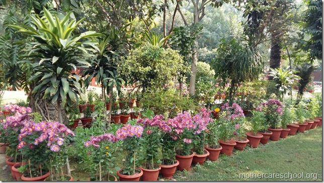Learning in the lap of Nature. The Gardens at Mothercare School this Winter January 2018 (6)