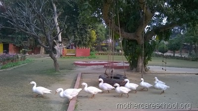 mothercare school,lucknow, garden (9)