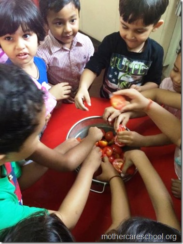 Nursery School kids harvesting organic tomatoes (10)